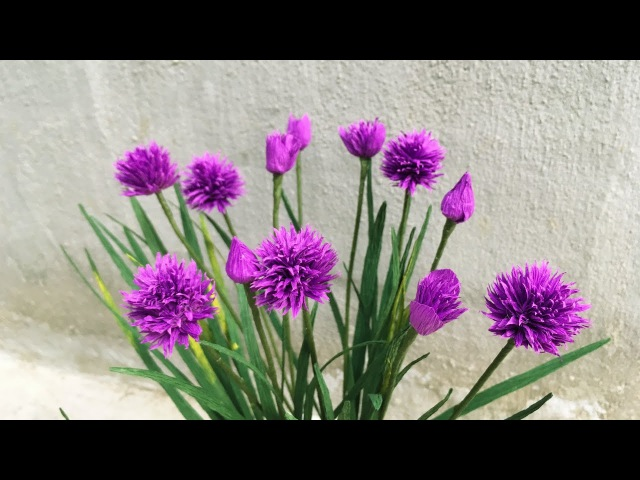 ABC TV | How To Make Chives Paper Flowers From Crepe Paper - Craft Tutorial