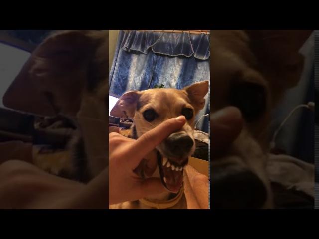 Собачий блатняк