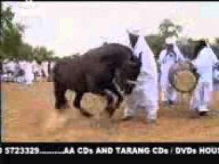 Танцующий конь супер ШООК!!!!