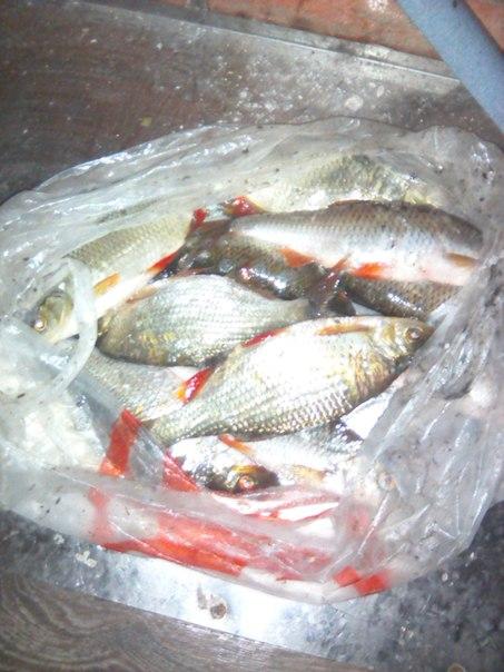Рыбалка сига на озере
