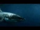 Касатки (лат.Orcinus orca - несущие смерть)