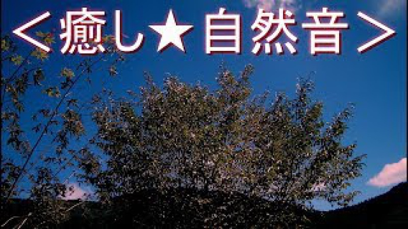 громкие игураши<癒し★自然音> ヒグラシが鳴く夏の夕暮れ時 ミンミンゼミ・