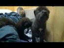 BBC Животный интеллект 1 Органы чувств Познавательный природа 2014