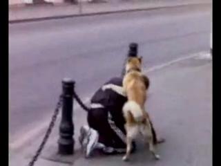 Прикол в центре города (собака еб#т мужика)