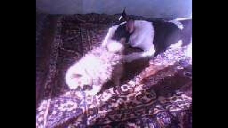29 апреля 2012 Даша Лаки и Данила Последний день Данюши уже не мог ходить и ездить со мной на работу 9 лет