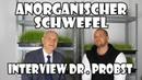 Anorganischer Schwefel - Ein Arzt spricht Klartext - Darmsanierung