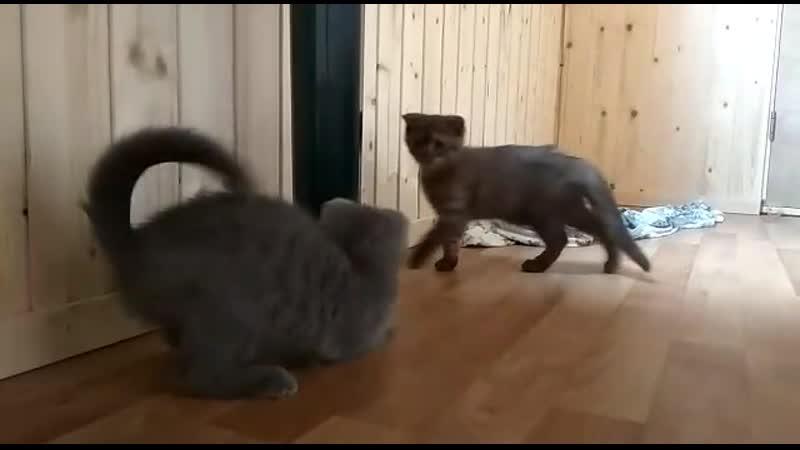 Котятки Джоник Неле и Чероки