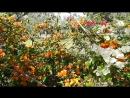 Экзотические цветы и пение птиц