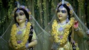 Special blessing today - Radha Madhava in Their yellow Vasant Panchami dress.