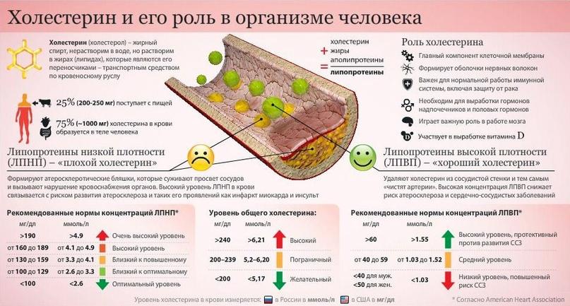 Сколько яиц в неделю можно есть?, изображение №3