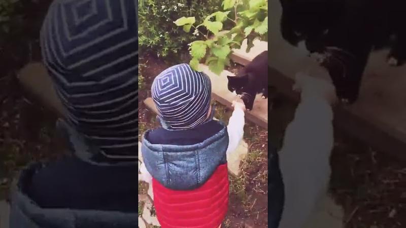 Кошечка, как у тебя дела