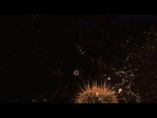 Взрыв мыльного пузыря на кактусе