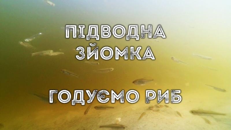 Підводна зйомка годуємо риб р Ворскла с Гавронці