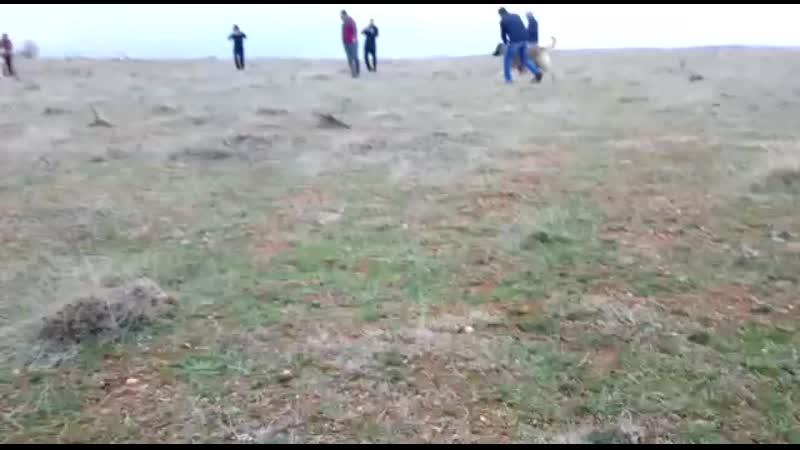 Kırıkkaleden Memet Hakkıayazın Corç VS Kırıkkaleden Alinin Bozo Maç 5 bin Puandı ( Maç Yoruma Açıktır)