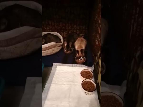 Кошки и коты из адской квартиры продолжение истории
