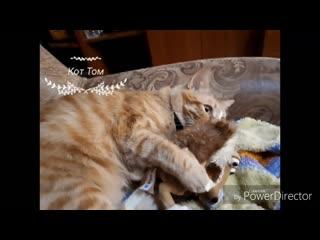 18 сентября - День рыжего кота  (кот Том ) !!!!@