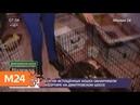 Десятки истощенных кошек обнаружили в квартире на Дмитровском шоссе - Москва 24