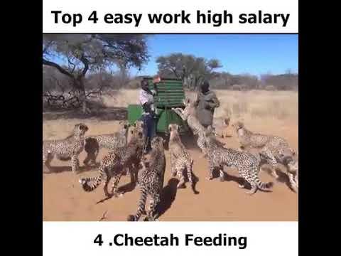 Top 4 easy work- High Salary