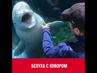 Белуха с юмором  Москва FM