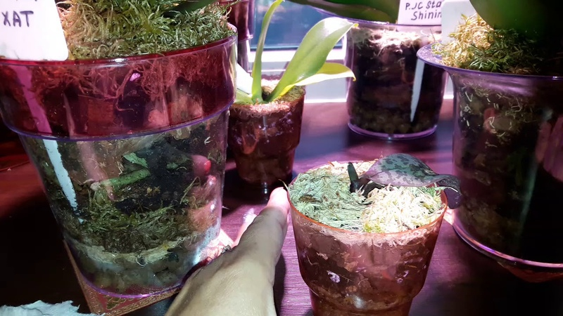 Орхидеи сравнение систем ЦеоФлора, закрытая, фитильный полив, классика.