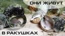 Биотопный аквариум для ракушковых цихлид Часть 1 Где брать информацию