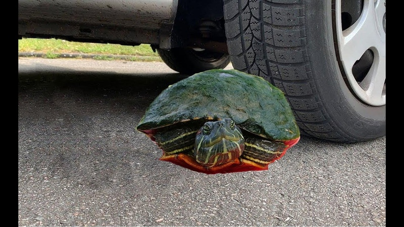 Crushing Crunchy Soft Things by Car : bottle of milk candy,egg... EXPERIMENTS - Turtle VS CAR
