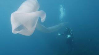 Divers Encounter Strange Deep-Sea Worm Over 8m Long