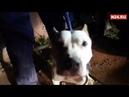 18 Съел друга житель Югры вынудил собак бороться за жизнь заперев на две недели в гараже
