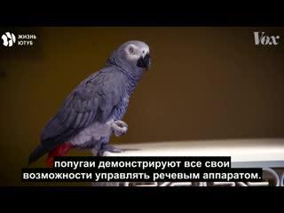 Почему попугаи могут разговаривать, а наши самые близкие биологические родственники обезьяны - нет NR