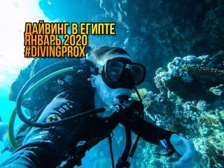 Дайвинг в египте #sharmelsheih #egypt #divingprox команда #prox74