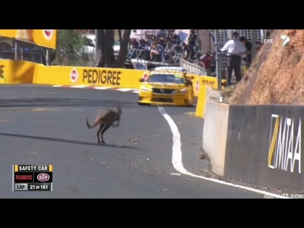 Bathurst vs. Kangaroos