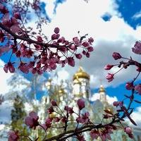 Александровск-Грушевское Благочиние