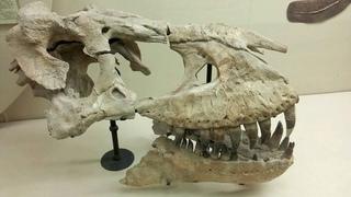 Палеонтологический музей имени Ю. А. Орлова. / Orlov Paleontological museum