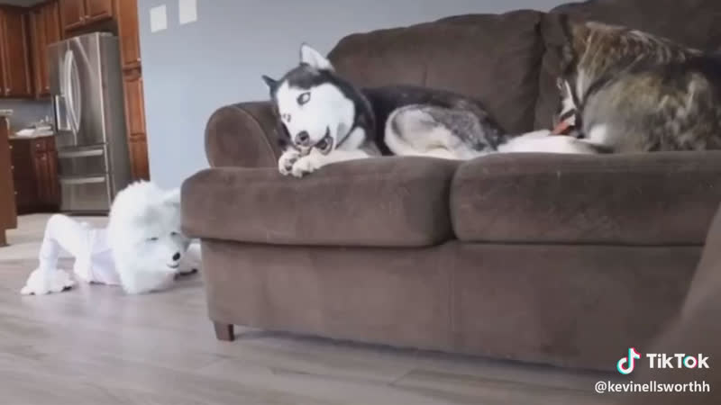 Собака в шоке🤣🤣