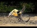 Hãi hùng Komodo xồng xộc Tấn công con mồi như chớp Nuốt chửng Vua Khỉ Bộ giáp Kim cương Bền thật