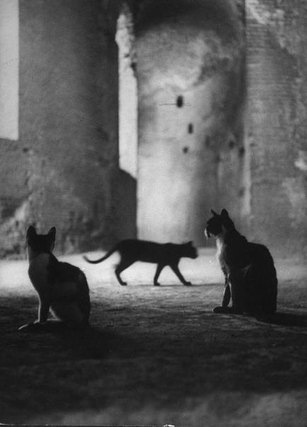 Котики гуляют по Колизею, 1950-е.