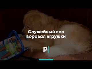 Служебный пес воровал игрушки