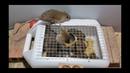 Saving 10 Mice in 10 minute🐀Rat trap 1 gate🐀Stupid Mouse Trap🐭 Easy make a Mouse Trap Mouse trap