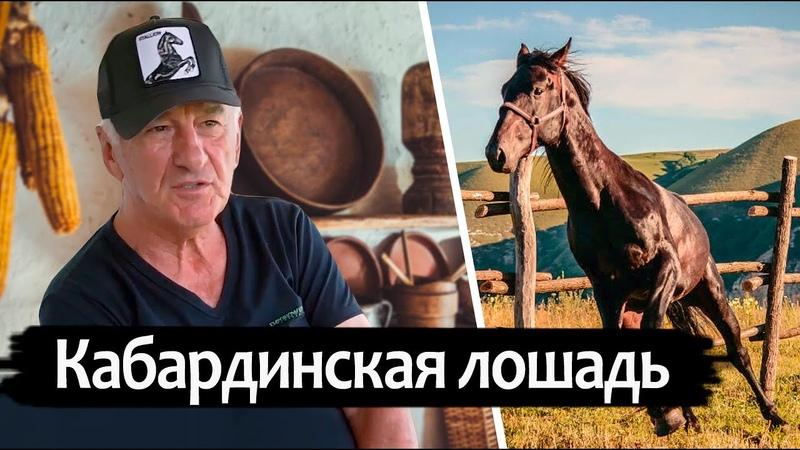 Вячеслав Дерев о кабардинской породе лошадей