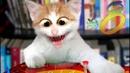 ПРИКОЛЫ С КОТАМИ ДО СЛЕЗ- Смешные Коты и Кошки 2019 Выпуск 8