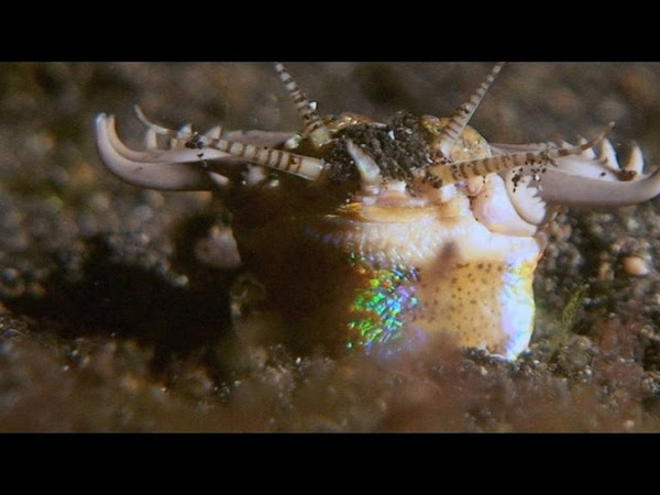 This Terrifying Worm Snatches Fish from the Ocean Floor