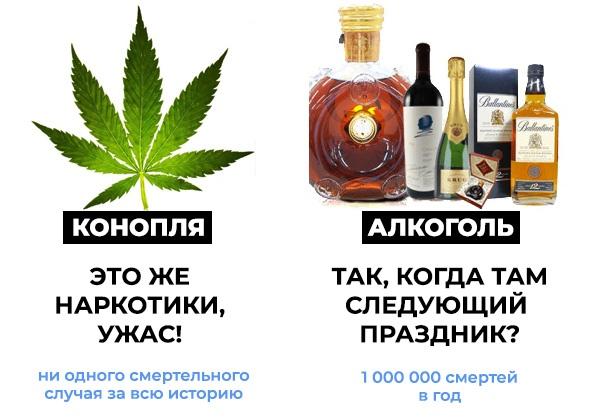 Алкоголь опаснее марихуаны в саратове растет конопля