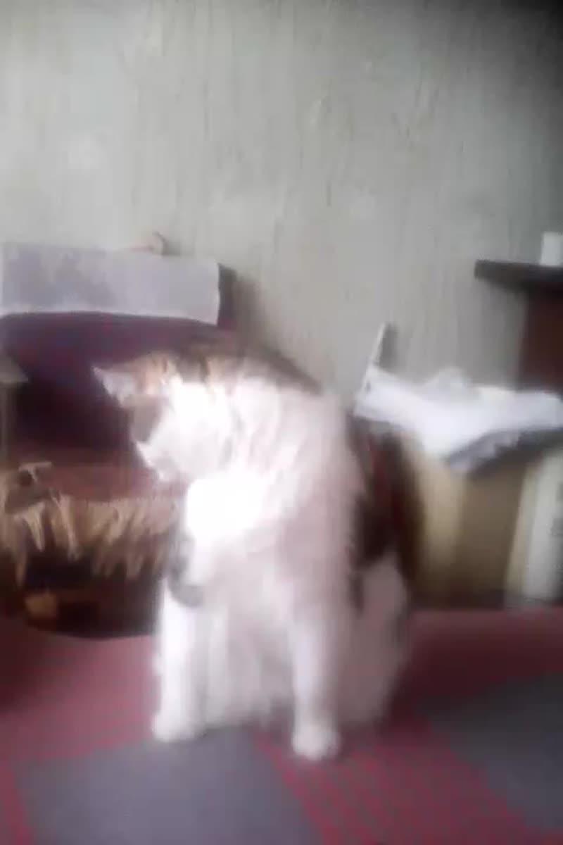 СПАСТЬ ИЛИ ГУЛЯТЬ?... (кот Семка не знает, чем заняться (время 12 часов дня)).