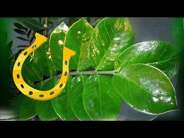 Комнатные растения ТАЛИСМАНЫ Биоэнергетика комнатных цветов