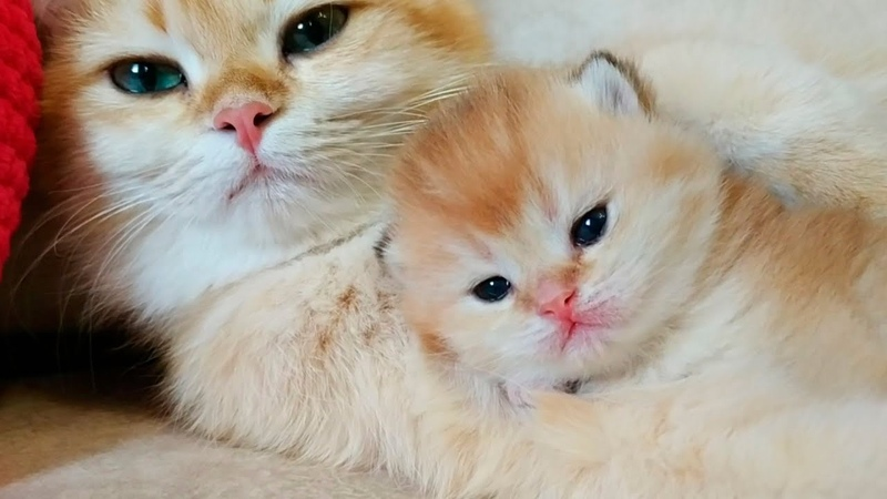 💕 2 Weeks After Birth Tiny Kittens Meowing Soo Cute