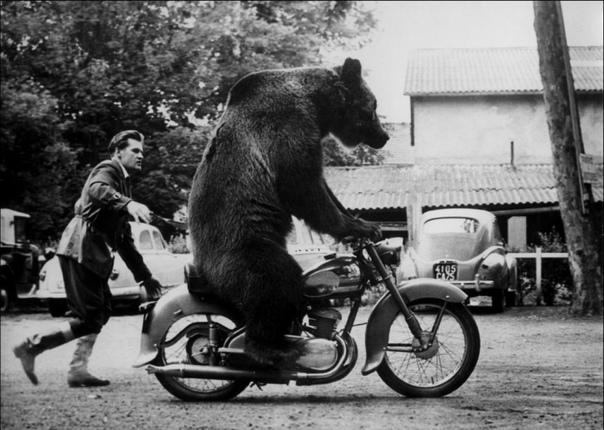 мне картинки афиш медведей на мотоциклах пользователю