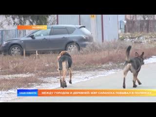 Между городом и деревней: мэр Саранска побывал в Полянках