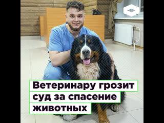 В Челябинске ветеринару Баграту Агажанову грозит суд за спасение животных  | ROMB