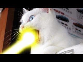 Смешные коты | Подборка за неделю #21