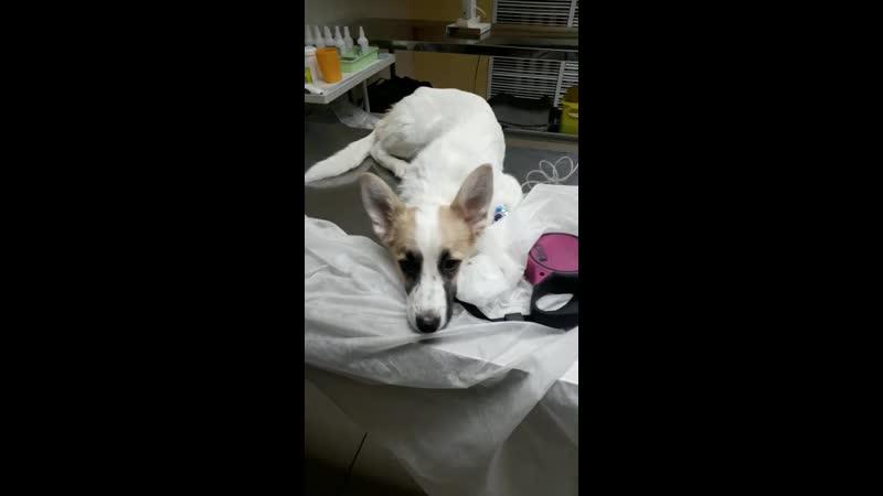 Вьюга в больничке